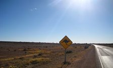 Road with Kangaroo warning sign