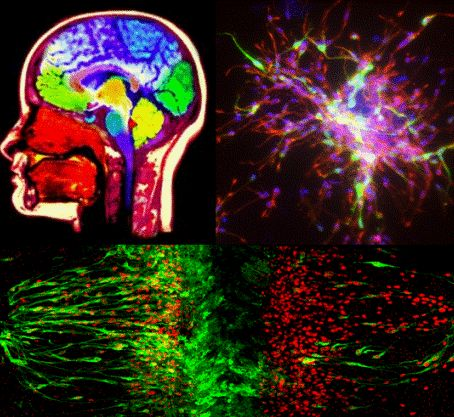 King's College London - Department of Neuroscience Education