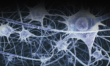 Neurons connections