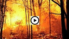 El Nino_fires_video