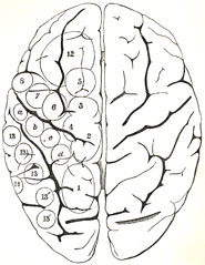 The location of various sensory and motor functions in the brain, from David Ferrier's 'The functions of the brain' (1876).