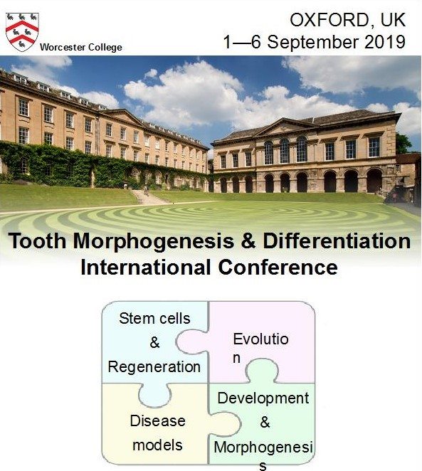 tooth-morphogenesis-conference