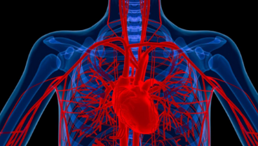 Heart attacks diagnosed quicker by new blood test