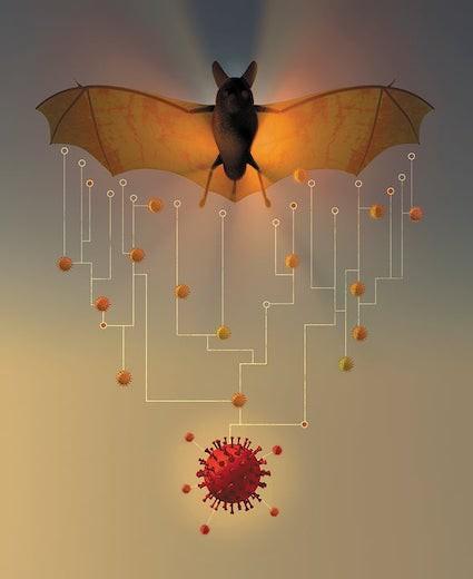 conspiracy bat