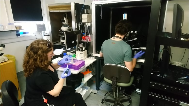 King's neuroscientists collaborate to work out the COVID-19 smell conundrum