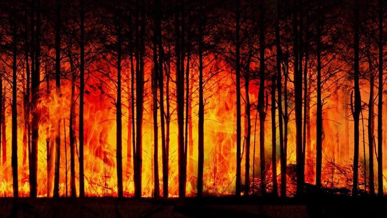 forest-fire-3836834_1280